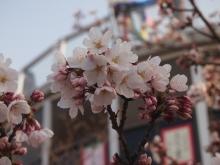 +++ りり☆Blog evolution +++ 広島在住OLの何かやらかしてる日記-20120408_184.jpg