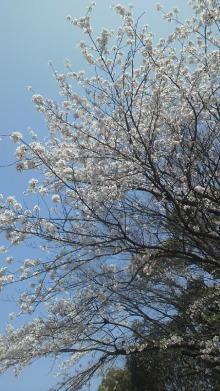 +++ りり☆Blog evolution +++ 広島在住OLの何かやらかしてる日記-2012041212330000.jpg