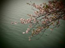 +++ りり☆Blog evolution +++ 広島在住OLの何かやらかしてる日記-20120415_003.jpg