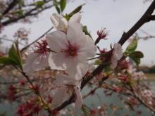 +++ りり☆Blog evolution +++ 広島在住OLの何かやらかしてる日記-20120415_005.jpg