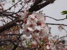 +++ りり☆Blog evolution +++ 広島在住OLの何かやらかしてる日記-20120415_006.jpg