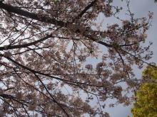 +++ りり☆Blog evolution +++ 広島在住OLの何かやらかしてる日記-20120415_007.jpg