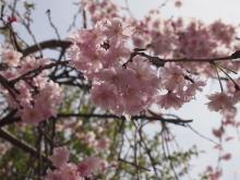 +++ りり☆Blog evolution +++ 広島在住OLの何かやらかしてる日記-20120415_009.jpg