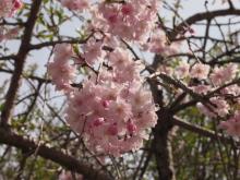 +++ りり☆Blog evolution +++ 広島在住OLの何かやらかしてる日記-20120415_010.jpg