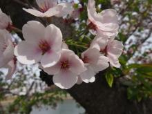 +++ りり☆Blog evolution +++ 広島在住OLの何かやらかしてる日記-20120415_012.jpg