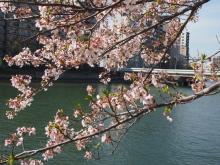 +++ りり☆Blog evolution +++ 広島在住OLの何かやらかしてる日記-20120415_021.jpg