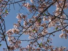 +++ りり☆Blog evolution +++ 広島在住OLの何かやらかしてる日記-20120415_023.jpg