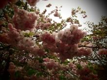 $+++ りり☆Blog evolution +++ 広島在住OLの何かやらかしてる日記-20120422_044.jpg