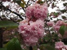 +++ りり☆Blog evolution +++ 広島在住OLの何かやらかしてる日記-20120422_010.jpg