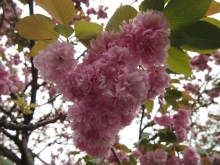 +++ りり☆Blog evolution +++ 広島在住OLの何かやらかしてる日記-20120422_016.jpg