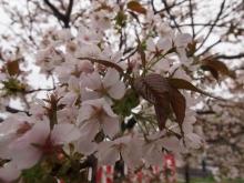 +++ りり☆Blog evolution +++ 広島在住OLの何かやらかしてる日記-20120422_024.jpg