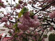 +++ りり☆Blog evolution +++ 広島在住OLの何かやらかしてる日記-20120422_028.jpg