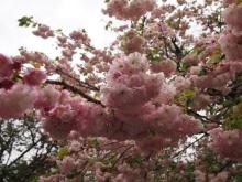+++ りり☆Blog evolution +++ 広島在住OLの何かやらかしてる日記-20120422_042.jpg