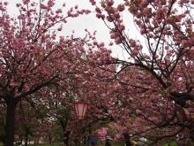 +++ りり☆Blog evolution +++ 広島在住OLの何かやらかしてる日記-20120422_051.jpg