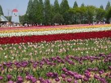 +++ りり☆Blog evolution +++ 広島在住OLの何かやらかしてる日記-20120506_055.jpg