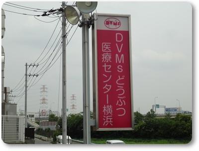 DSC02592.jpg