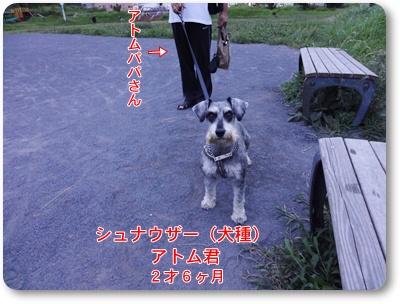 DSC03265.jpg