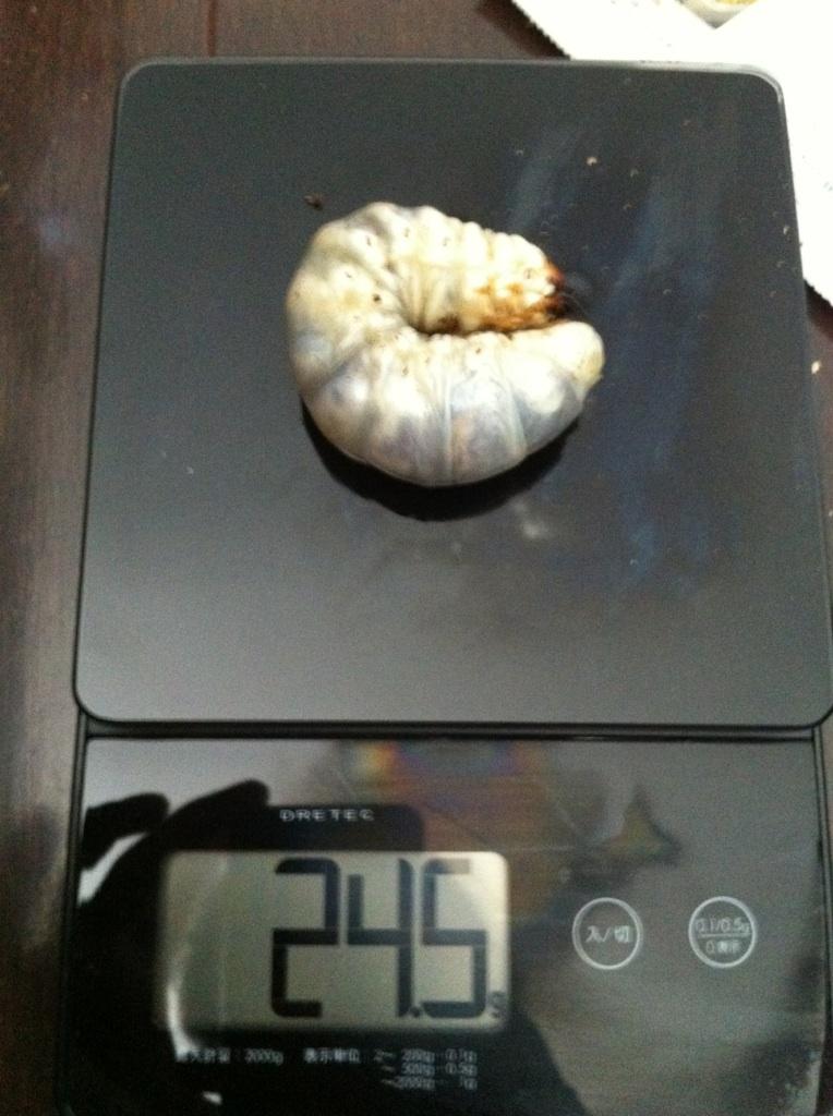 サキシマ24.5g