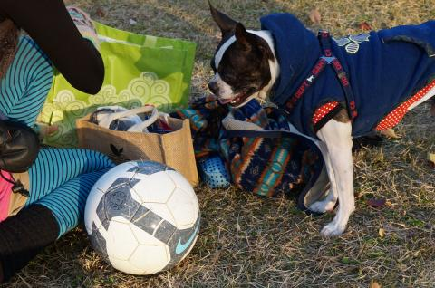 soccer4a