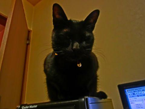 cat0017.jpg