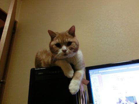cat0018.jpg