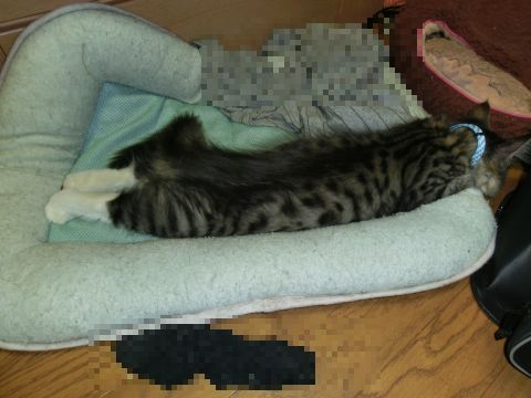 cat0021.jpg