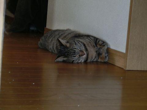 cat0024.jpg