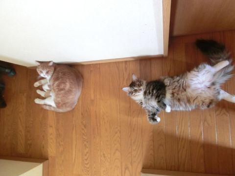 cat0025.jpg