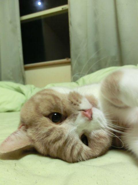 cat0027.jpg