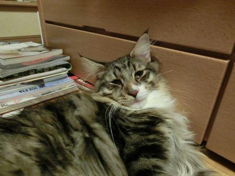 cat0033.jpg