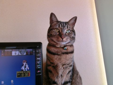 cat0036.jpg