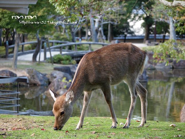 20121031奈良公園1