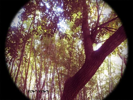 20121125photo13.jpg