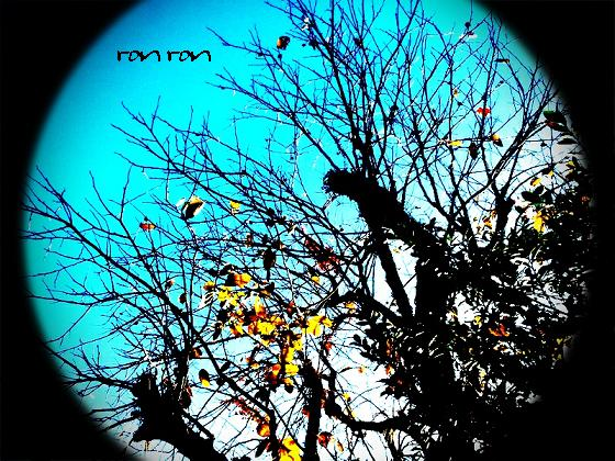 20121125photo14.jpg