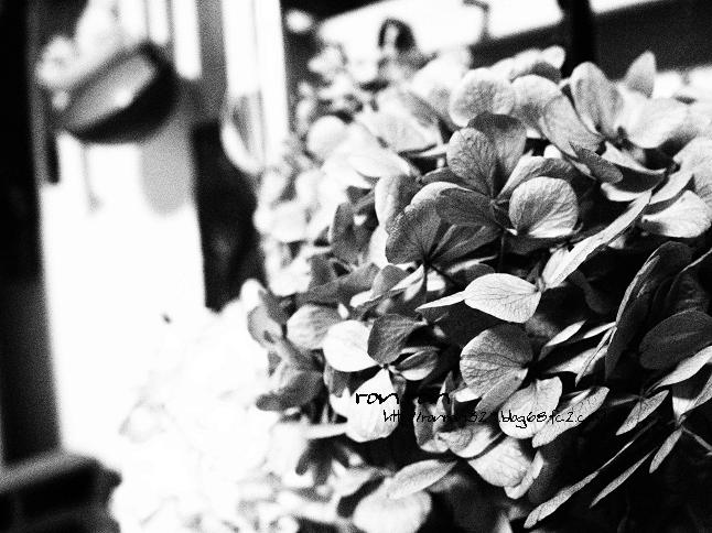 20121230photo1.jpg
