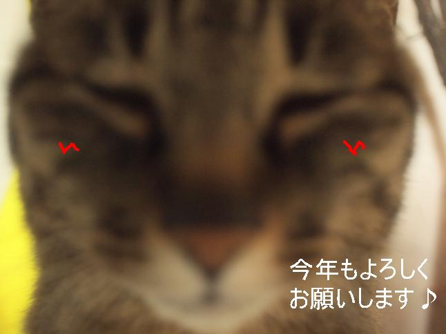 ぷち707