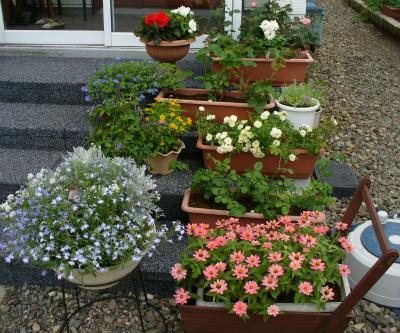 階段上の豆福ガーデン 2