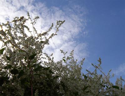 夏雪カズラと秋の空
