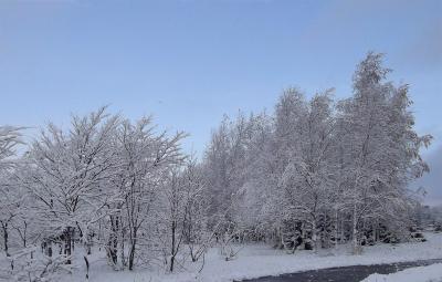 雪の華 2