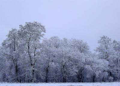 雪の華 1