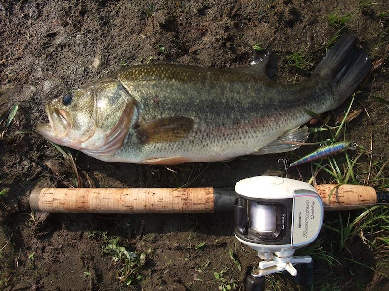 bass070412.jpg