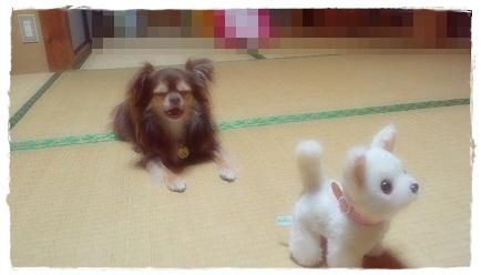 ツナ&マヨちゃん