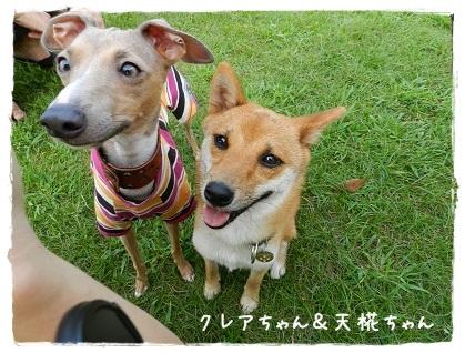 クレアちゃん&天椛ちゃん