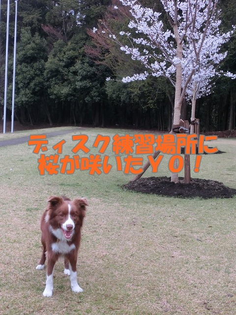 CIMG2213moji.jpg