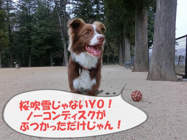 CIMG2225moji.jpg