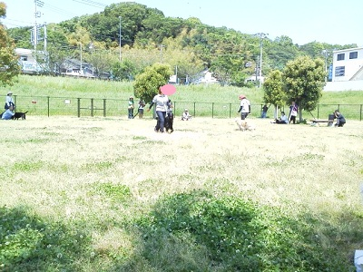 しつけ教室(親水公園)3
