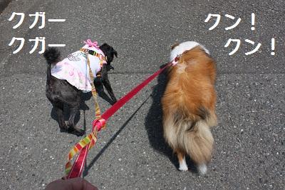 2ワン散歩
