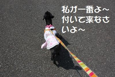 2ワン散歩3