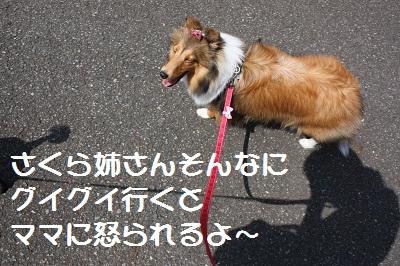 2ワン散歩2