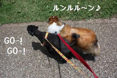サクラと散歩4